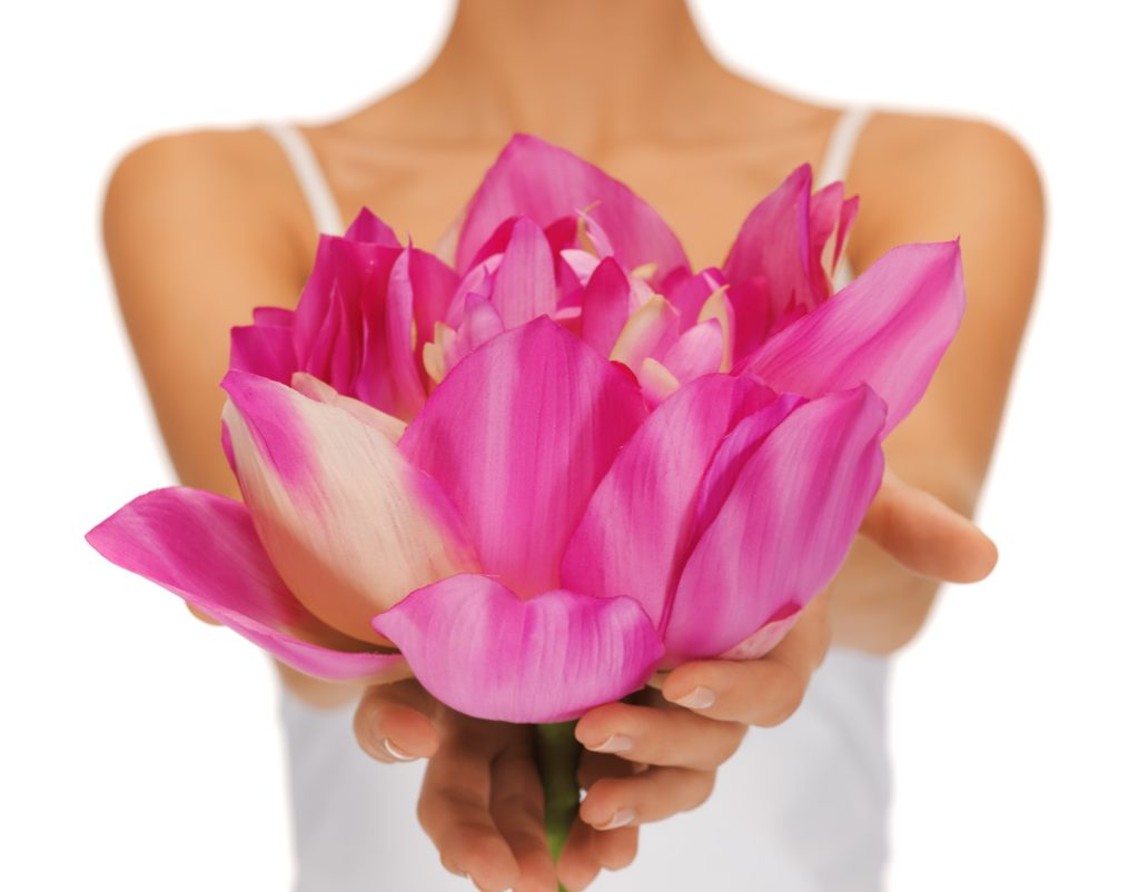 15803606 - closeup picture of woman hands holding lotus flower
